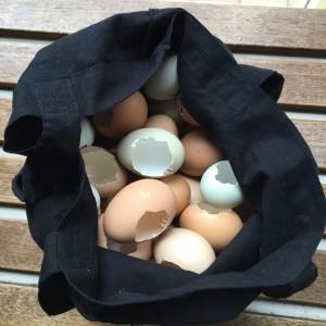 Eggshells, Annette Carmichael, 2016